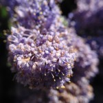 Macro Photography - taken with DCKina Macro Lens for iPhone 5/5s