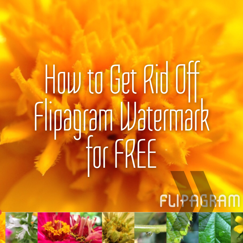 flipagram pc gratuit