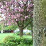 Olloclip Telephoto Lens for iPhone 6/6 Plus